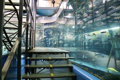 山梨県立富士湧水の里水族館 森の中の水族館-51