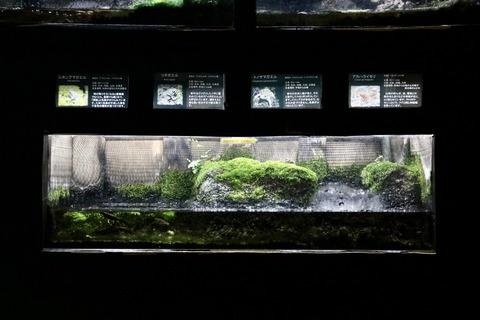 山梨県立富士湧水の里水族館 森の中の水族館-41
