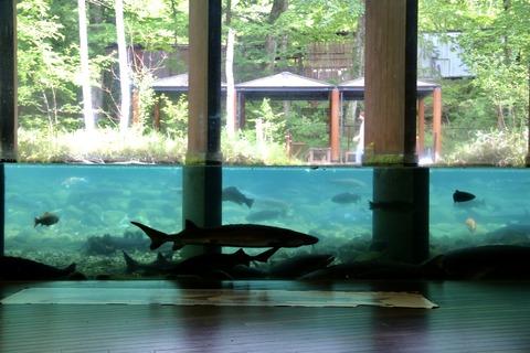 山梨県立富士湧水の里水族館 森の中の水族館-38