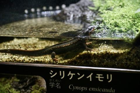山梨県立富士湧水の里水族館 森の中の水族館-52