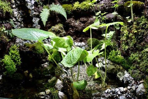 山梨県立富士湧水の里水族館 森の中の水族館-4