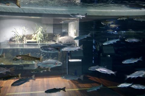 山梨県立富士湧水の里水族館 森の中の水族館-25