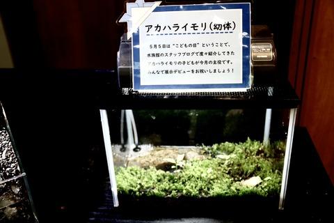 山梨県立富士湧水の里水族館 森の中の水族館-53