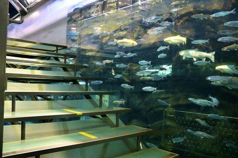 山梨県立富士湧水の里水族館 森の中の水族館-48