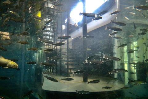 山梨県立富士湧水の里水族館 森の中の水族館-49