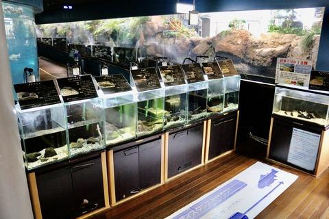 山梨県立富士湧水の里水族館 森の中の水族館-9