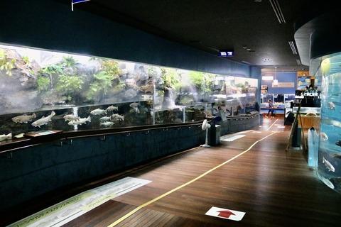 山梨県立富士湧水の里水族館 森の中の水族館-15