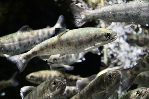 山梨県立富士湧水の里水族館 森の中の水族館-17