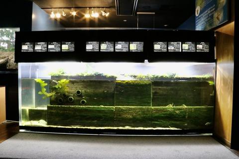 山梨県立富士湧水の里水族館 森の中の水族館-5