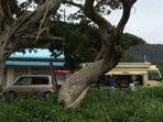 加計呂麻島の巡回図書館