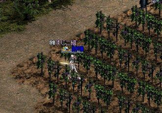 ブドウ畑(゜_゜、)