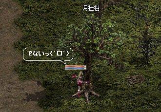 月桂樹(`□´)