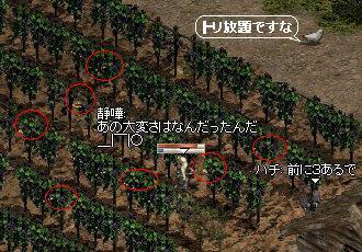 ブドウ畑(-_-;)