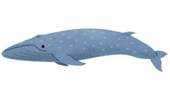 シロナガスクジラ「地球史上最大の生き物です」←こいつwwywywy