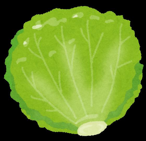 food_lettuce
