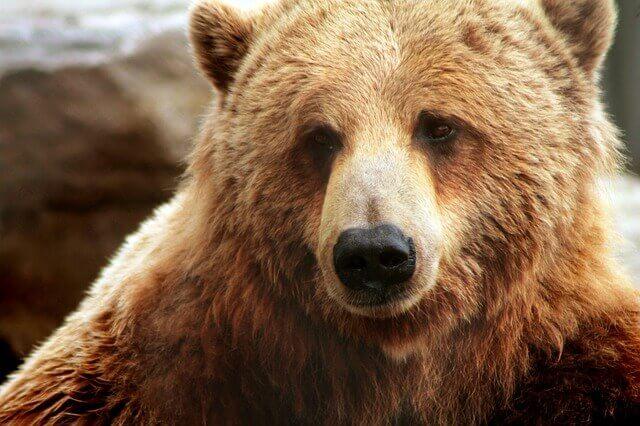 bear-2747135_640-2-1-1