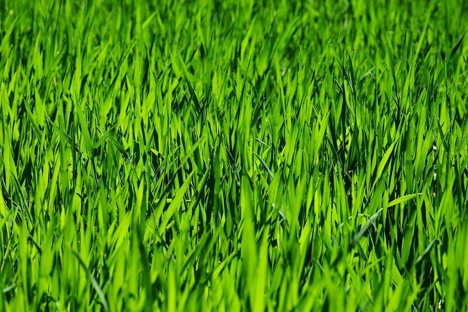 grass-3336700_960_720