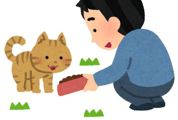 cat_eduke_noraneko