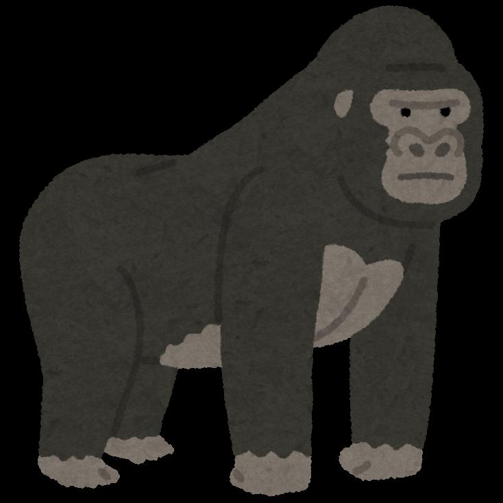 animal_gorilla (3)