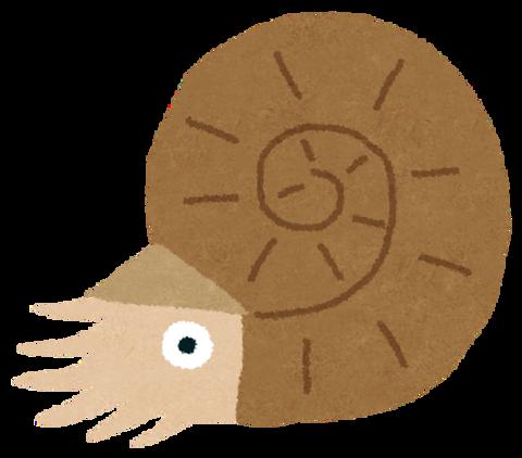 kodai_ammonite