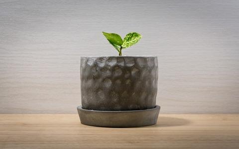 職場に観葉植物があると、仕事の生産性が15%UP!観葉植物の驚くべき効果