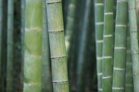 bamboo-919052_960_720