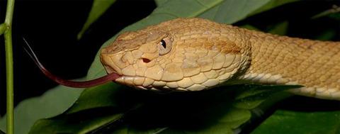 猛毒のヘビに占拠された島!ケイマーダ・グランデ島