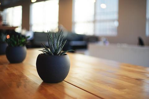 plant-1081856_960_720