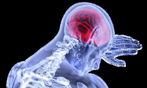 脳は文章を「読んで」ない。「イメージ」でとらえているだけ。脳の雑学