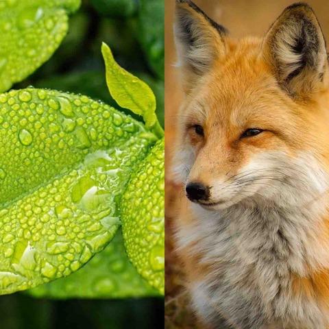 「植物」と「動物」の違いって、正確に言える?