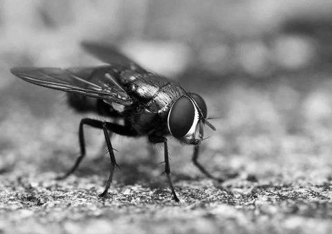 ハエの飛行能力、すごすぎ。