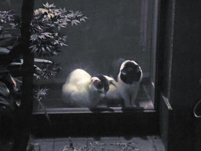 子シロ&子シロクロ(水墨画のような1枚)