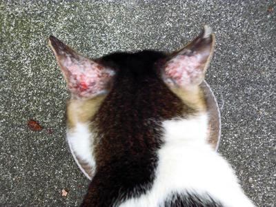 ボロボロの猫②