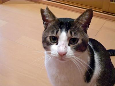 ボロボロの猫⑤