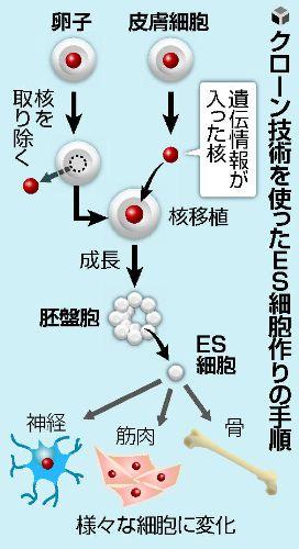 世界健康科学垺a�_【幹細胞】世界初人クローンES細胞の作製に成功米国オレゴン