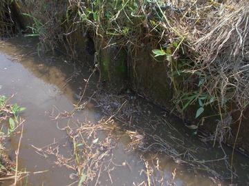 180803生き物調査用水路でカエル捜索