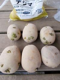 170830種芋デジマ