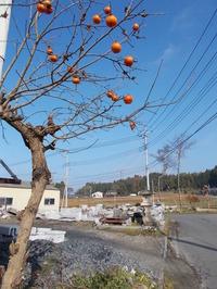 161120togei-sato荒牧の柿