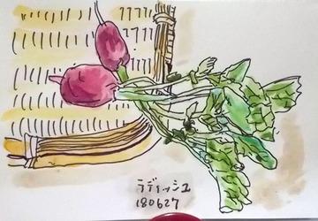 180704野菜ラディッシュ