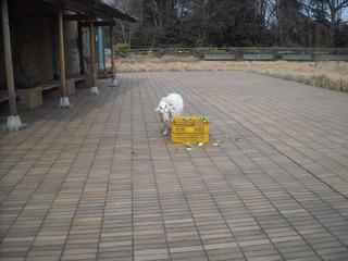 entrance Yagi san