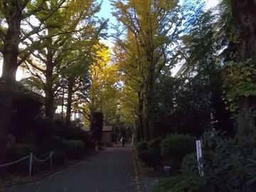 181024院内の森