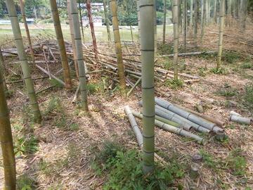 170512伐採竹を再利用