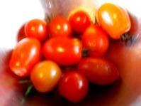 170701トマト収穫