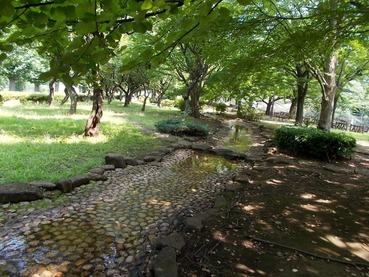 170711仙川公園