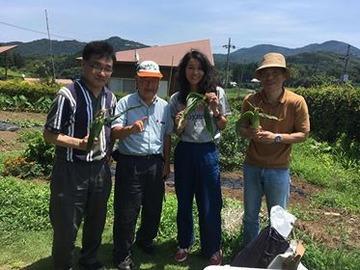 180713Hチームネギ収穫
