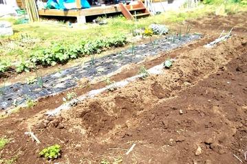 植えた180419トマト、キュウリ、ナスを