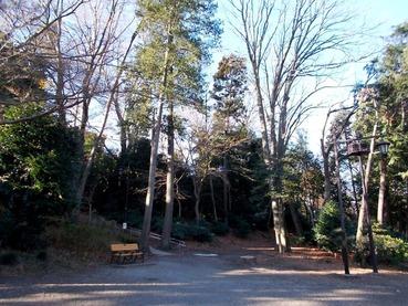 171230葉を落としている栃の巨木群