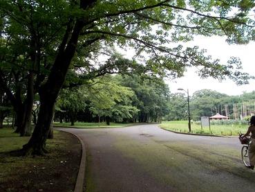 170731小都立小井公園