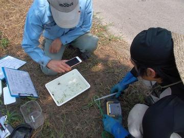 180803生き物調査水中生物特定