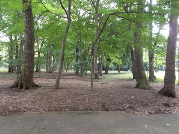 170731小金井公園巨木の森